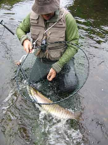 Anthony catches his first Taw salmon 14 pounds, safely returned